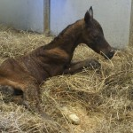 True Aura 2012 Filly