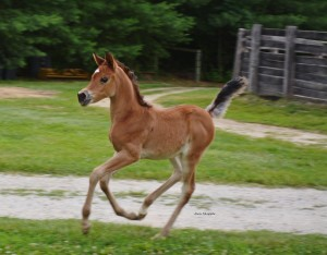 Zina filly2