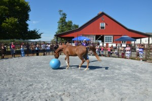 lucy in round pen