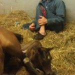 Callie's 2012 filly